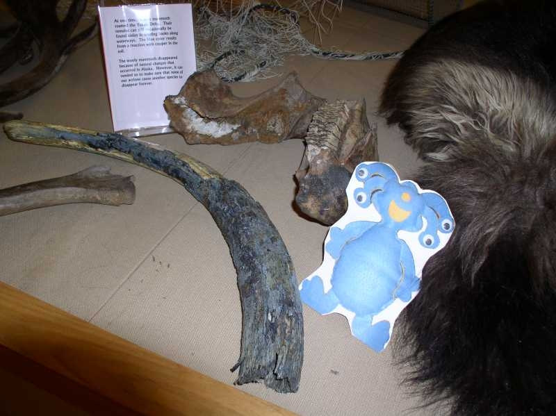 mammothtusktooth107.JPG